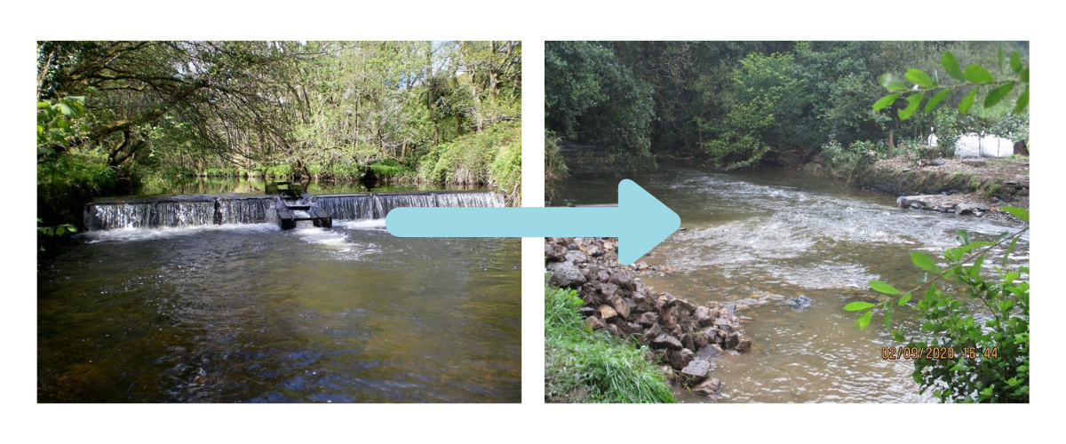 Weir removal - West Wales Rivers Trust