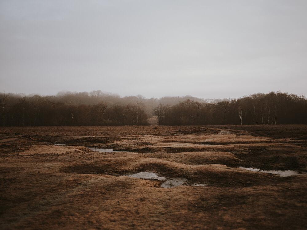 Gloomy wetland stock photo