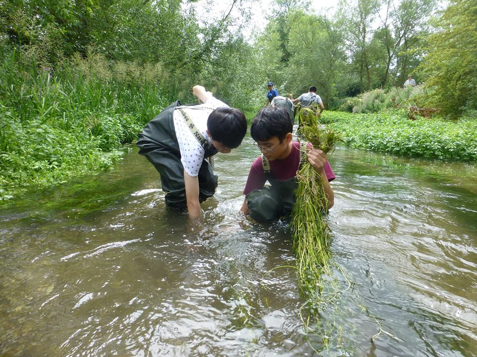 Water crowfoot planting, Action for the River Kennet