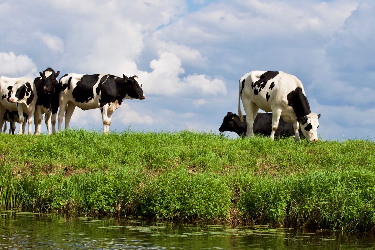Farming-farm-agriculture