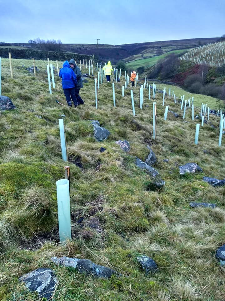 Aire Rivers Trust – Tree Planting