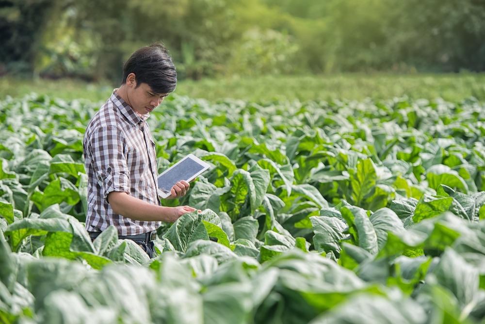 A man in a field of future nicotine salt