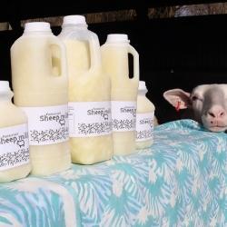 Top Paddock Dairy