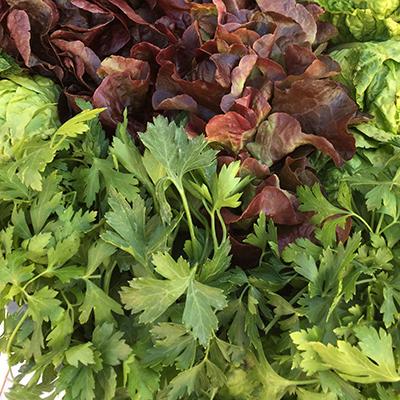 Salads & herbs