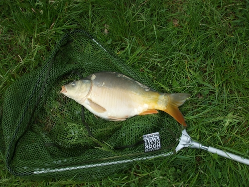 Mirror Carp captured from Peterborough by Andy