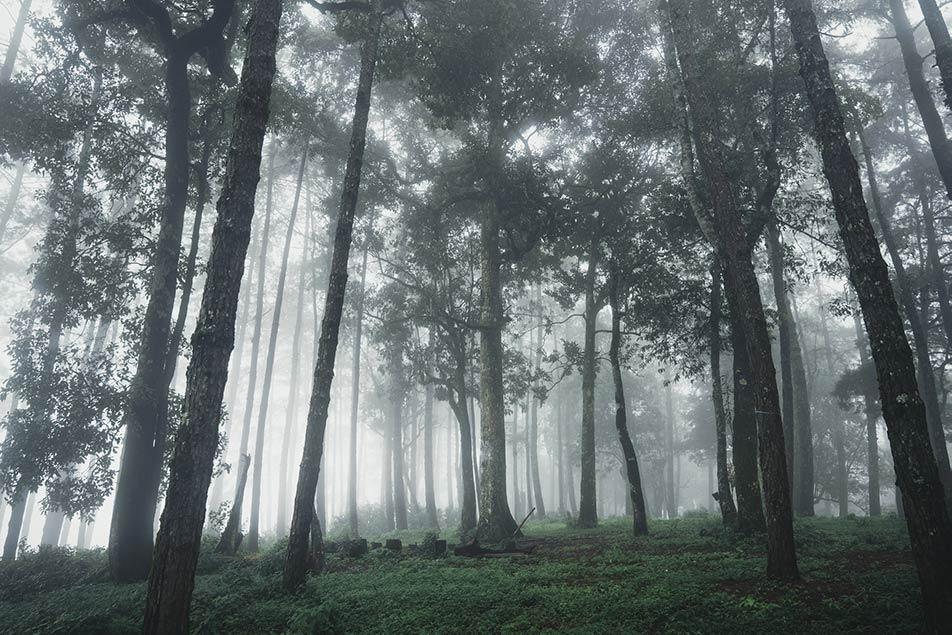 piggia nella foresta