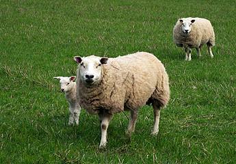 Undeclared meat found in UK takeaway meals