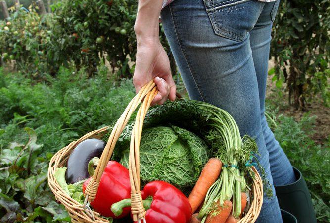 British farms 'critically short' of seasonal fruit and veg labour supply
