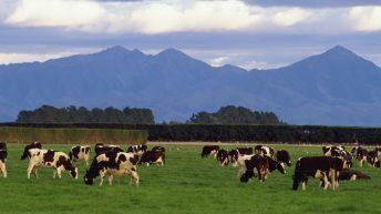 Fonterra's milk deliveries down almost 9% in September