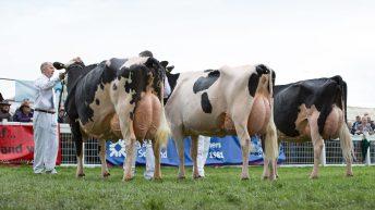 New Holstein UK president named