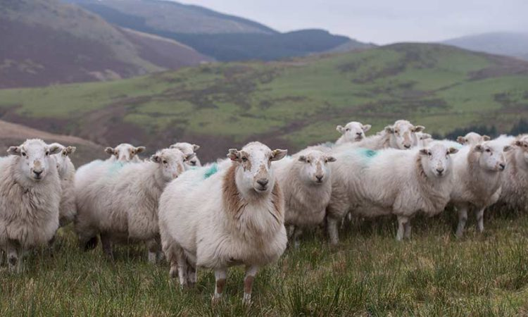 Over 15,600 farm businesses in Wales to receive BPS payments tomorrow
