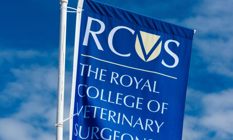 RCVS to weigh up changes to its disciplinary system