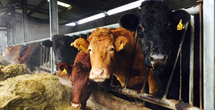 FUW calls on UK and Welsh Governments to act now as fodder shortages loom