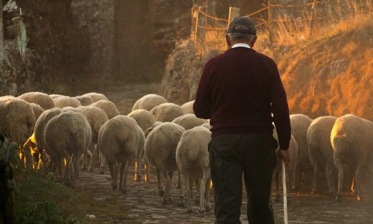 Welsh farmers to be paid £1,000 to complete benchmarking