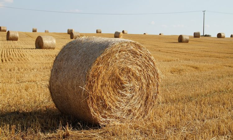 Save straw supplies and prepare for winter now, union warns