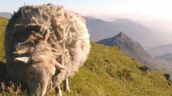 Sheep farmers urged to speak up against 'fake news'