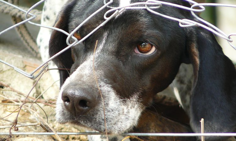 Animal cruelty maximum sentences to be increased tenfold