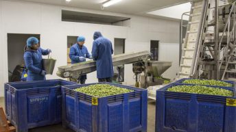 New pilot scheme to bring 2,500 seasonal workers to UK farms