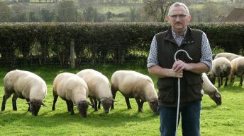 Maximising lamb production from grass based systems