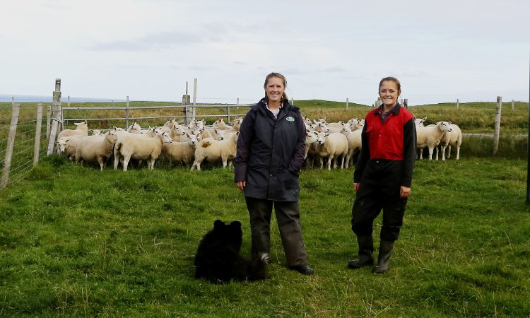 Focus on reproduction management in Shetland