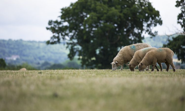 2 farmers wanted to help shape the future of the UK's sheep industry