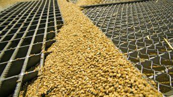 Grain price: Last week saw positive moves