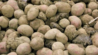 Potato growers urged to put as much energy into storage as growth