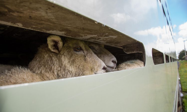 Technical paper paints grim picture for 'no-deal' animal exports