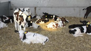 'RSPCA cannot stand by if animal welfare standards are trashed by government'