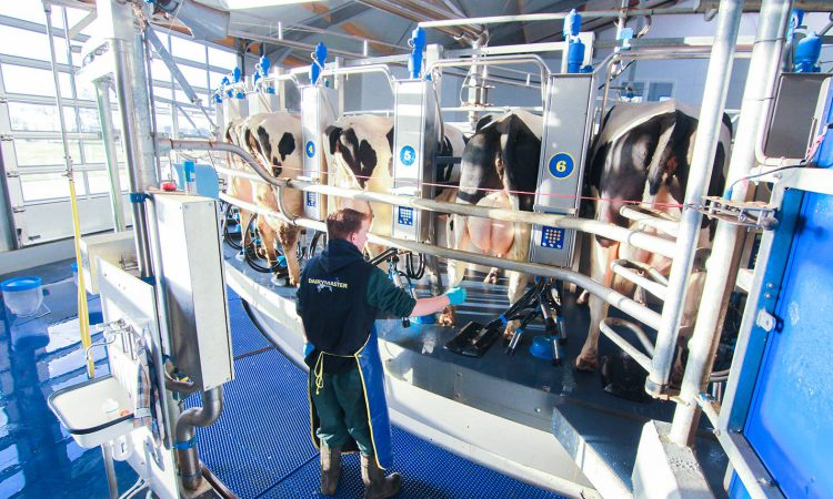 A simple milk sample can provide a world of information for dairy farmers