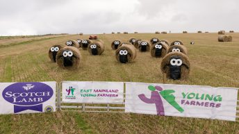 Pics: Bale Art competition finalists revealed