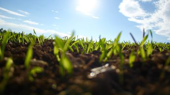 Producer organisations set to provide 'funding relief' for growers – NFU