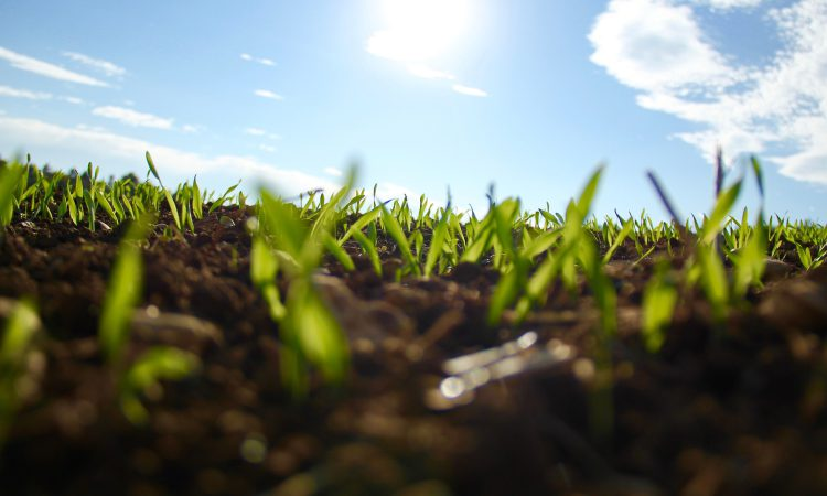 Could working on your soil health reduce your fertiliser wastage?