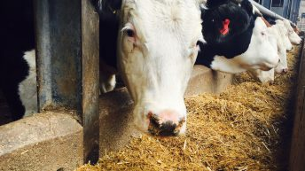 Farming and environmental groups unite on farm funding message