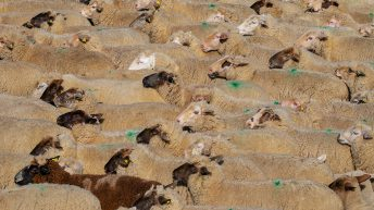 Sector action leads to breakthrough in fight against sheep dip disposal fees