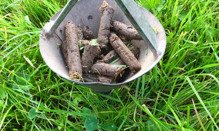 Soil health under the microscope at Better Grazing meetings