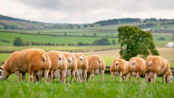 iTexel…are you ready for the future of sheep farming?