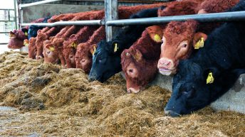 Reducing food production could cut emissions – UK report
