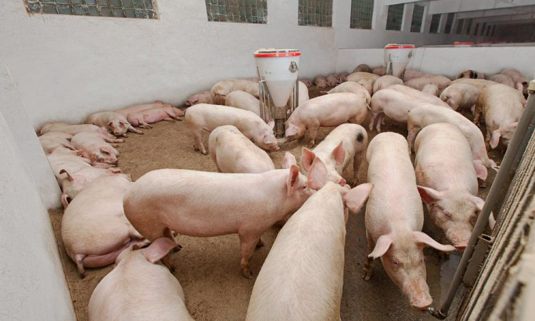 Preventing animal disease is the next frontier for agriculture in the UK