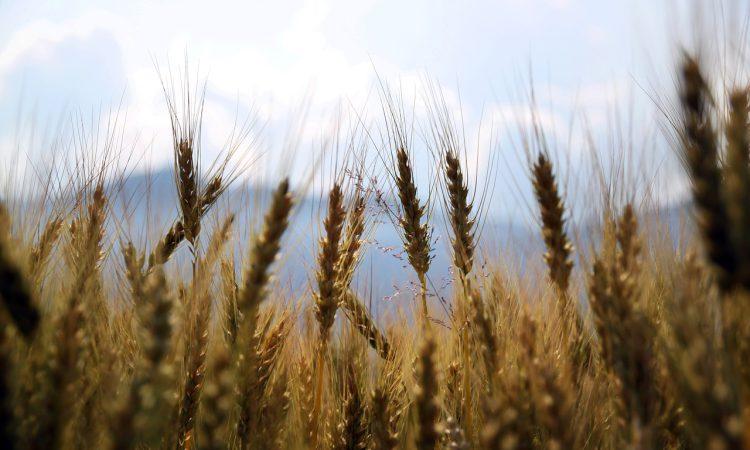 Agri-food sector now worth £122 billion to UK economy