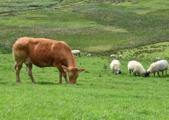 Views sought on proposed livestock movement changes for Wales