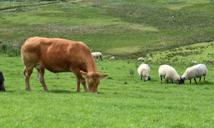 NFU Cymru and NFU Mutual search for Welsh livestock champion