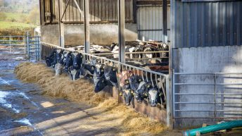 Farmers urged to start planning winter feed and bedding strategy