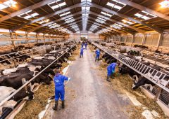 FUW seeks nominations for outstanding dairy person in Wales