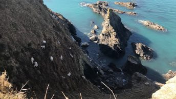 Rescue mission enters 3rd day for 60 sheep trapped on sea cliff