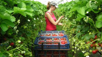 GLBG calls for research support for the horticulture industry