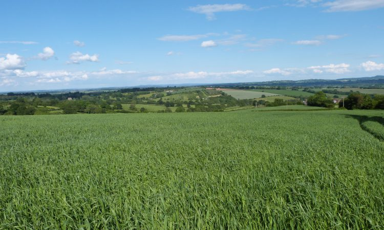334ac at Worcestershire sees productive farmland for sale on 9 lots
