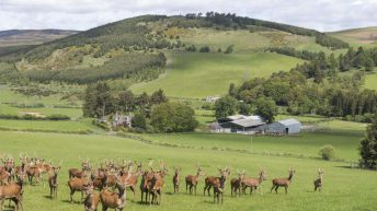 Highly regarded farming estate on the market…with a deer enterprise
