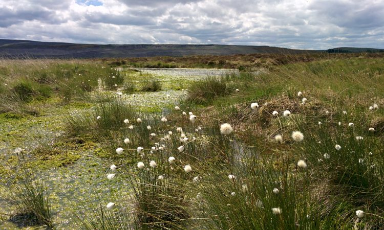 £40 million Green Recovery Challenge Fund opens for applications