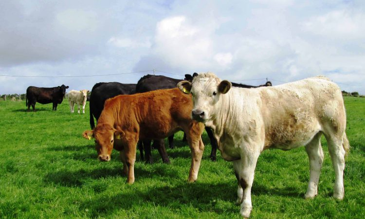 Beef support is at the top of UFU agenda